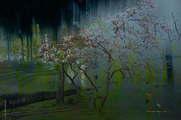 magnolie-w